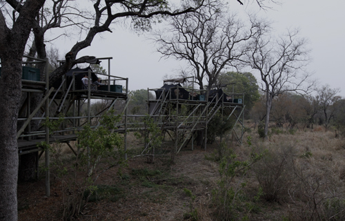 kruger tree house tent